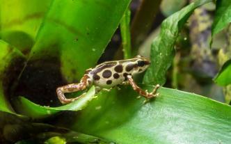 dartfrog-001