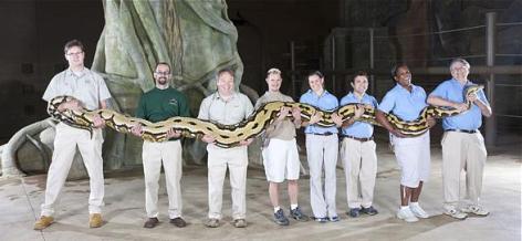 Reticulated-python-3