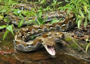 reticulated-python